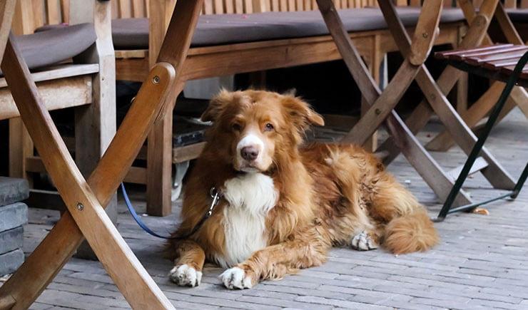 restaurantes y mascotas